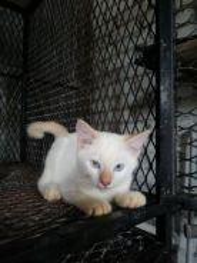 Kucing baka DMH