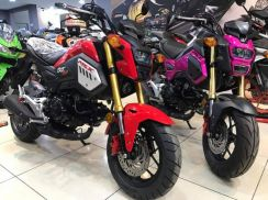 Honda MSX 125 ~ New Model Honda ~ Z125 PRO ~TNT135