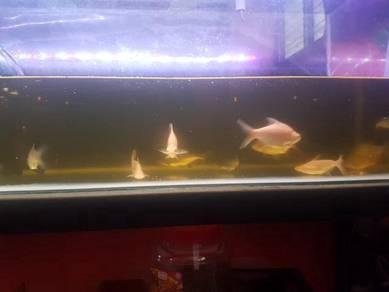 Ikan utk dilepaskn