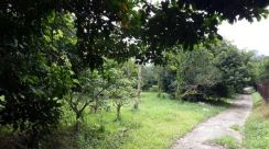( Mantin N.Sembilan ) 5.862 ACRES Agriculture Land