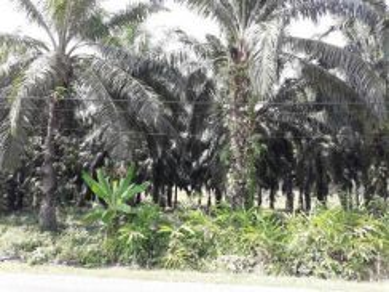 Ladang Kelapa sawit - 3.6 Acres FREEHOLD Kuala Krau