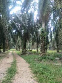 155 acres Agricultural/freehold/TNB&SAJ/Johor Bahru
