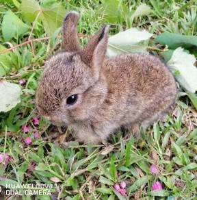 ND rabbit baby