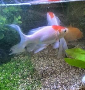 Aquarium dan Ikan
