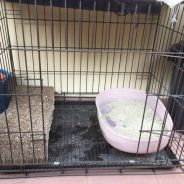 Cat or dog cage and accessories