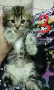 Kitten Anak Kucing Cat