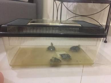 Plastic Terrarium / Aquarium