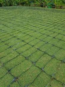 Rumput carpet dan khidmat lanskap