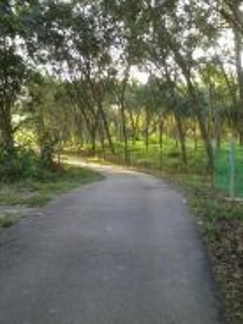 (Murah) Agricutural Land at Pekan Dangi, Kuala Pilah