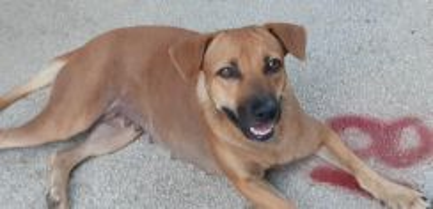 Doggie Lemon for adoption