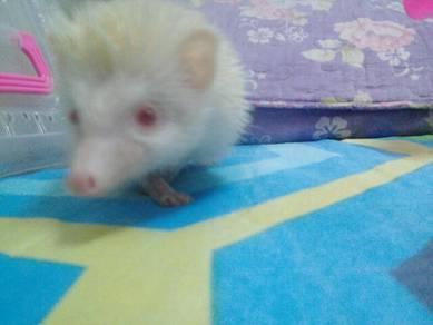Hedgehog ingin dilepaskan
