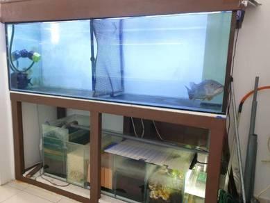 Aquarium Akuarium Fish Tank 6x2x2 dan Ikan