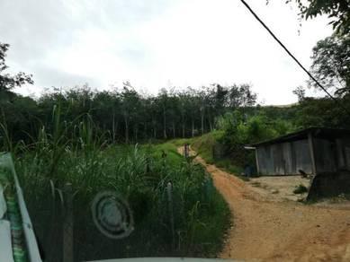 5Acres rubber land & durian farm at Sg Dua Bentong