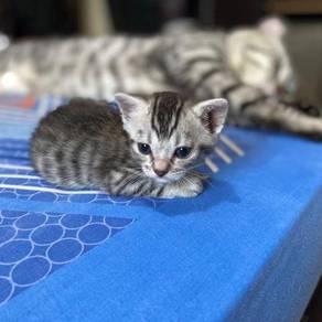 Mixed breed kitten