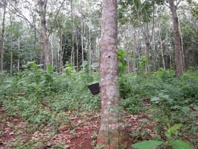 Kebun Getah di Lanchang Pahang