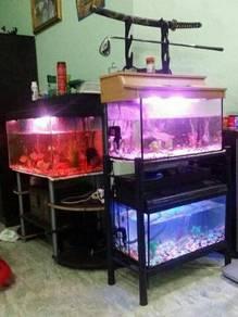 Akuarium aquarium akurium