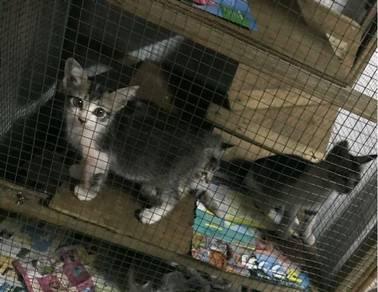 Kucing untuk diberi