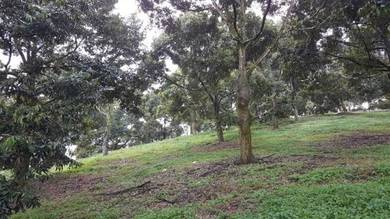 [Dusun Durian] 9.9 Acres Durian orchard(old tree) Raub Pahang for Sale