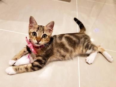 Kitten - Marble