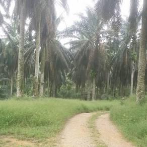 Tanah Pertanian Untuk Dijual