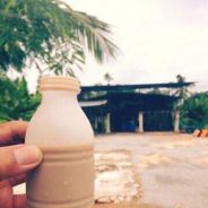 Susu Kambing Segar Muar