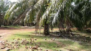 Tanah sawit untuk dijual