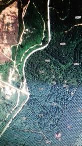 Sungai Siput agriculture land main road