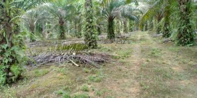 TANAH utk dijual  Kg Sg Kelat , Sungai Balang