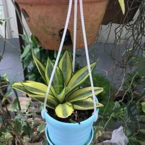 Viper bowstring hemp