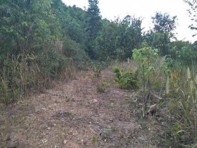 Tanah Pertanian Kodiang
