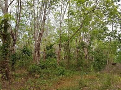 Land in TITI TINGGI PERLIS