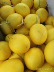 Buah rockmelon cantaloupe untuk dijual