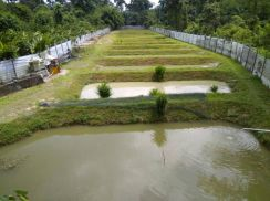 Fish Farm with Rental and Fish to be Taken Over