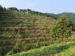 60 acres durian orchard and oil palm estate land for sale Raub Pahang