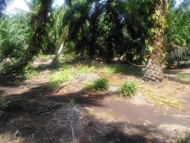 Tanah di Pontian