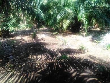 Tanah Pertanian di Pontian