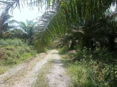 Agricultural land at Jalan Sedili Mawar, Kota Tinggi