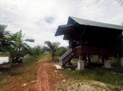 Land permatang pauh kubang semang coconot tree chicken farm