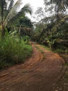 Pekan Nanas AGR.Land for Sale (Zoning Light Ind.land)