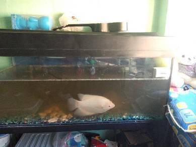 2Nd Aquarium 4th
