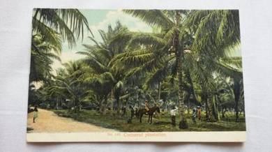 Antik Postcard Cocoanut Plantation 1900 PC 396