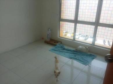 Cat Boarding di Rumah