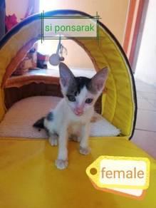 Kittens anak kucing