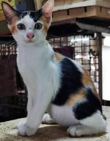 Beautiful Mixed Coloured Cat (Chriss)