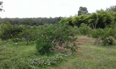 Tanah Kebun Batu 6 Jln Kodiang-Changlun Gran 1 nama