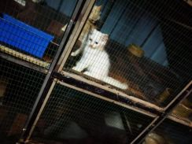 Kitten DLH (JANTAN) 2Bulan
