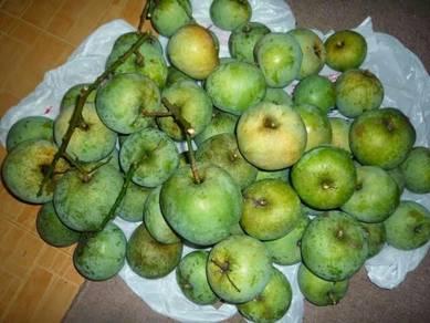 Mangga epal