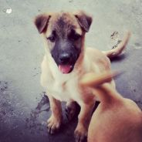 Female Oct Puppy