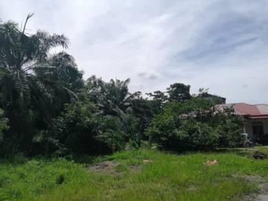 Tanah berserta kelapa sawit