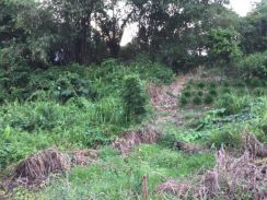 Buso land (near Siniawan) for Sales - Mix Zone Lot Perpetuity Land